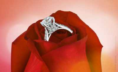 Diamond ring in rose flower