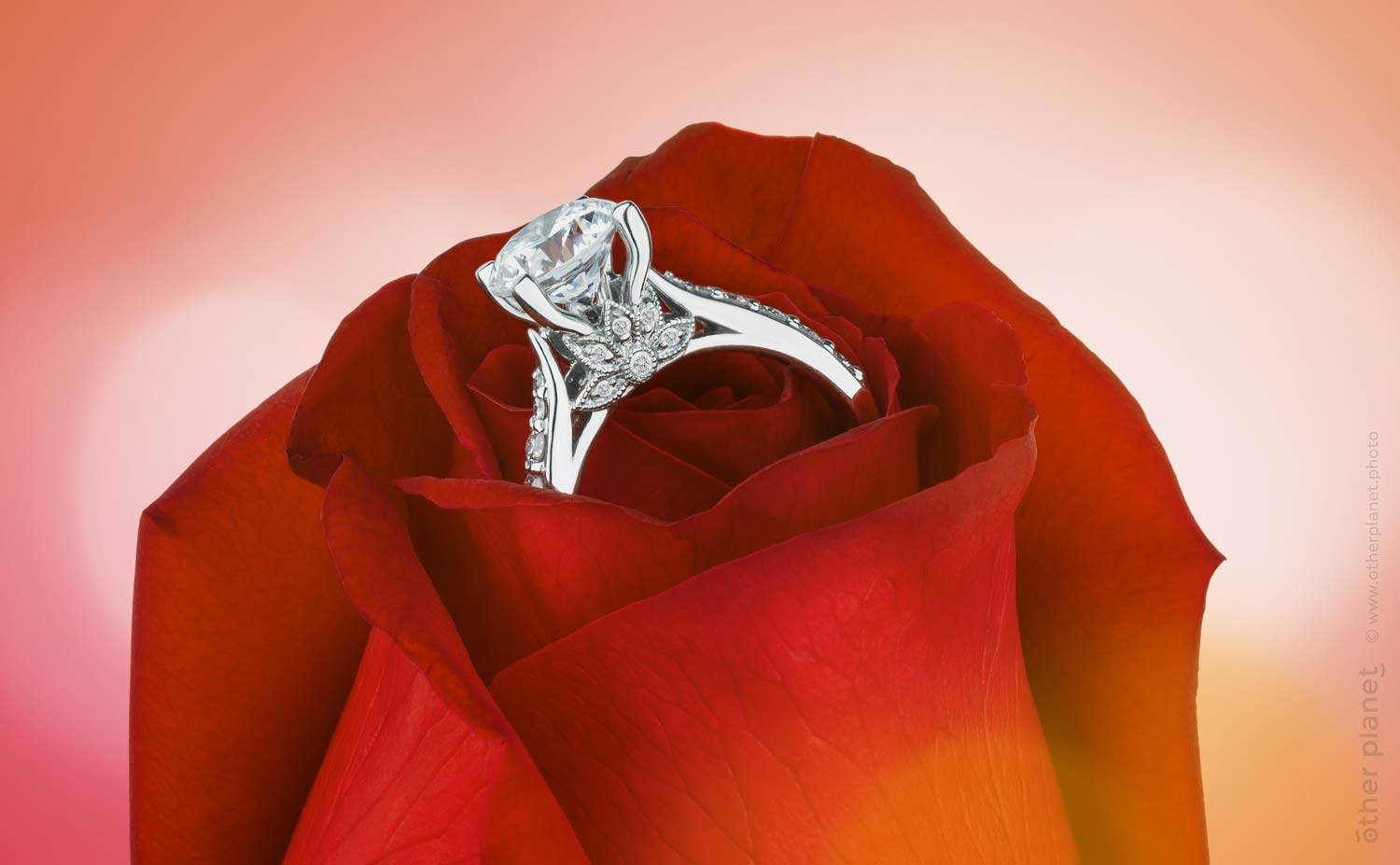 Diamond ring in rose flower