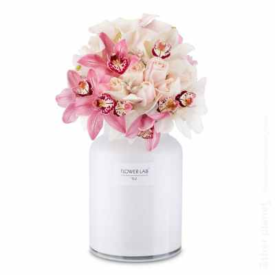 Orchids in white vase