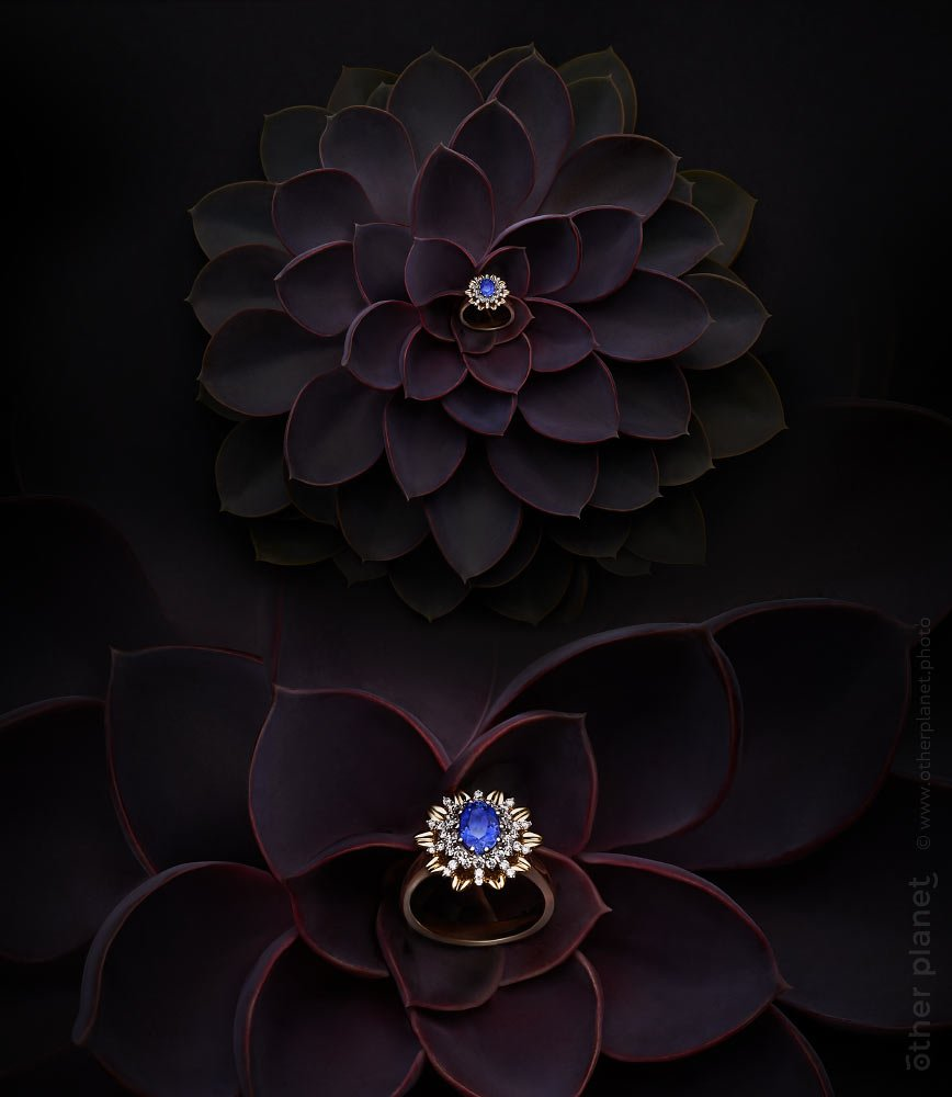 Jewelry arrangement sapphire ring on succulent in dark environment